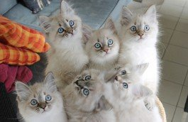 onze kittens en planning