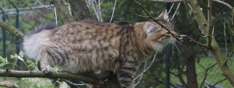 Onze katten kunnen heerlijk naar buiten